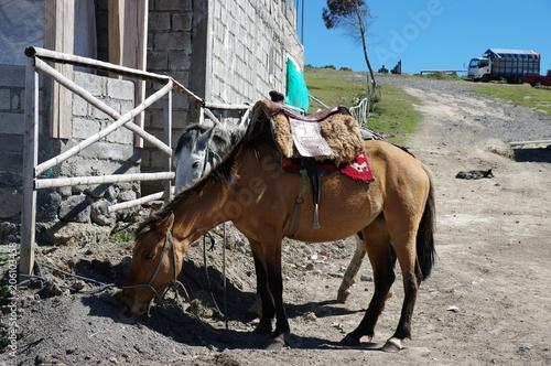 Photo sur Toile Vache Cheval sellé au repos -2