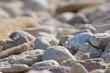 磯浜の石 城原海岸