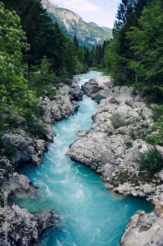 Fototapeta Beautiful blue apline river Soca, popular outdoor destination, Soca Valley, Slovenia, Europe obraz