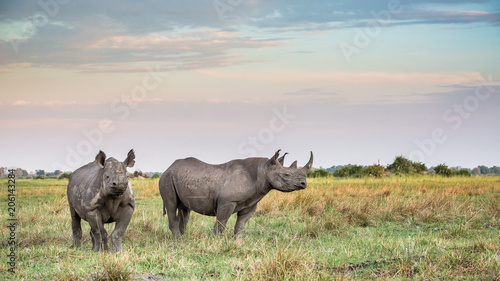 Foto op Plexiglas Neushoorn Rhinoceros in the Wild