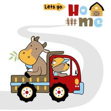 Bull On Truck With Bear The Farmer, Vector Cartoon Illustration