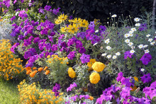 Fleurs Colorées En Massif, France