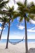 cradle beach and coconut tree