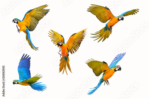 Foto op Canvas Papegaai Set of macaw parrot isolated on white background