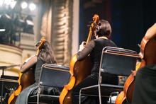 Musician Play Violin. Female V...