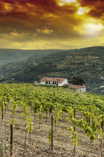 Fotobehang Wijngaard Viticulture on the Portuguese hills