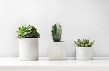 Succulents And Cactus In A Concrete Pot On A White Table