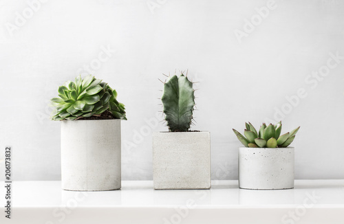 Photo sur Toile Cactus Succulents and cactus in a concrete pot on a white bedside table