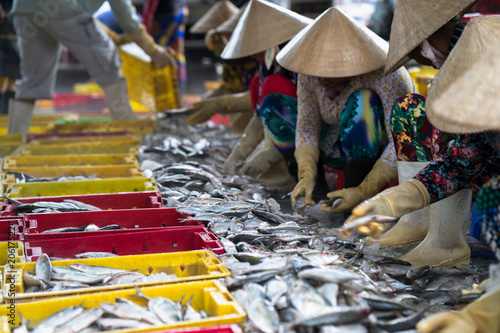 Fototapeta Caught fishes sorting to baskets by Vietnamese women workers in Tac Cau fishing