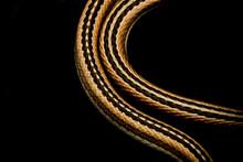 Snake Body Shining Like Gold Chain