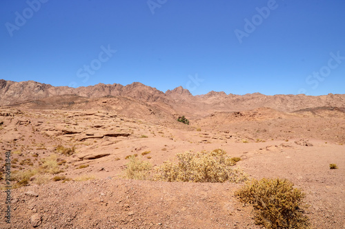Foto op Aluminium Zalm mountain-desert landscape, mountains of red sandstone, plain covered with rare desert vegetation, in the background an oasis with several palm trees, against the background of a cloudless blue sky, So