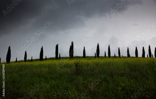 Foto op Aluminium Donkergrijs row of cypress trees at sunset - iconic tuscan landscape