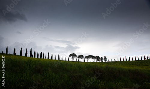 Foto op Canvas Zwart row of cypress trees at sunset - iconic tuscan landscape