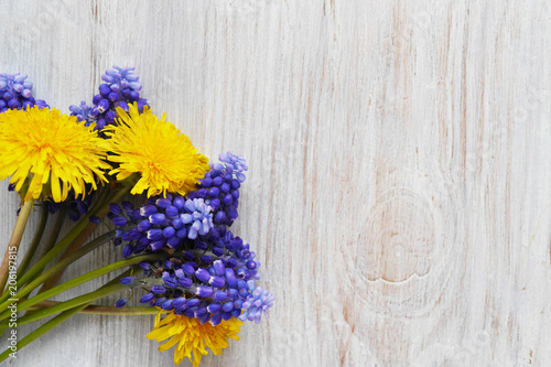 Fotografie, Obraz  Muscari flowers on a wooden bleached background, top view, flat layout