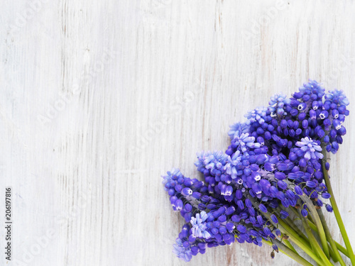 Obraz na plátně  Muscari flowers on a wooden bleached background, top view, flat layout