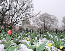 Spring Snow At The Capitol