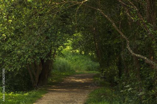 Tuinposter Weg in bos camino con árboles formando una entrada