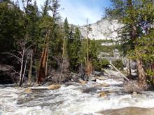 Yosemite National Park Creek Among The Trees