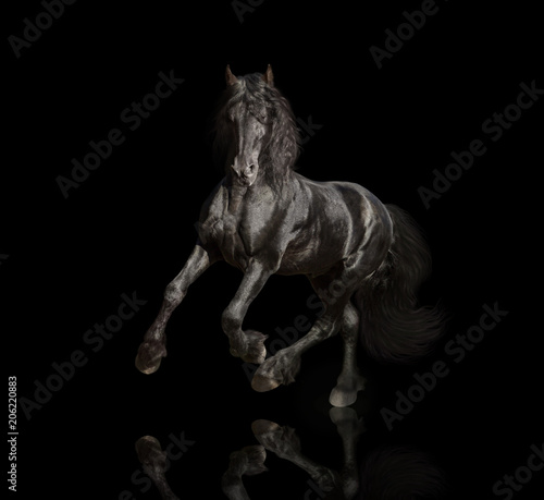 Foto op Canvas Paarden Big black Friesian horse runs isolated on the black background