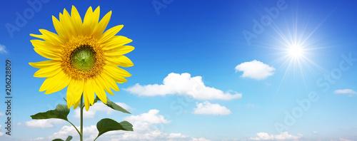 Staande foto Lente Wunderschöne Sonnenblume