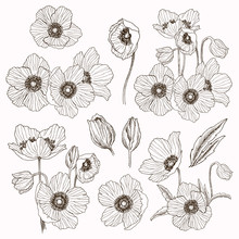 Anemone Flower Vector Drawing ...