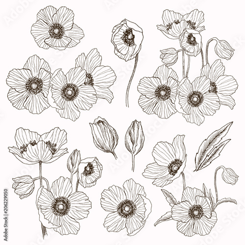 Anemone flower vector drawing set Wallpaper Mural