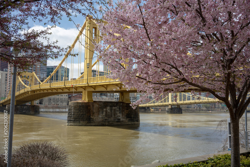 Photo Cherry Blossoms along the Allegheny River frame the Roberto Clemente Bridge
