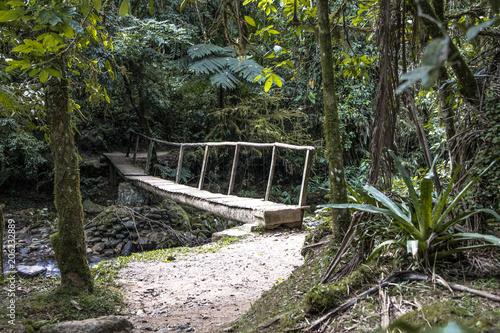 Tuinposter Weg in bos Caminhos na Mata, trilha
