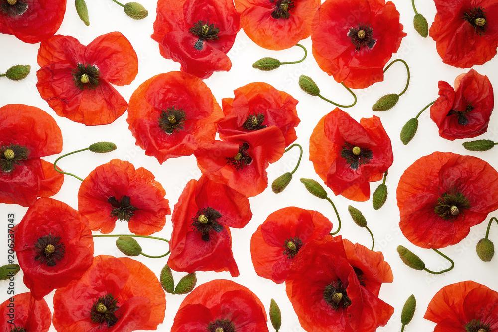 Obraz Czerwone maki i plemniki (zielone pędy) na białym tle - tapeta, tło fototapeta, plakat