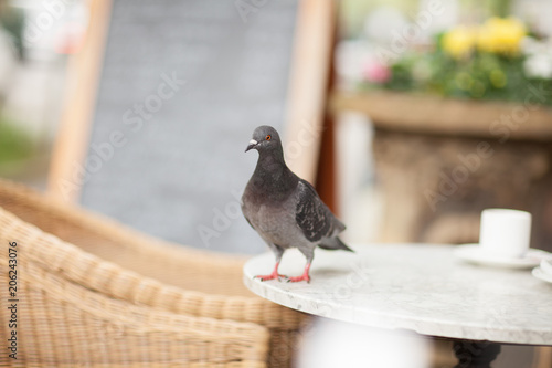 Foto  Happy pigeon eating a few crumbs, leftovers from the plate in a street cafe in t