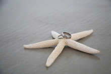 Starfish And Rings