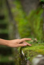 Female Hand Touches Moss