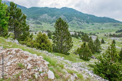 Foto op Canvas Pistache Rainy clouds approach the green mountain meadow.