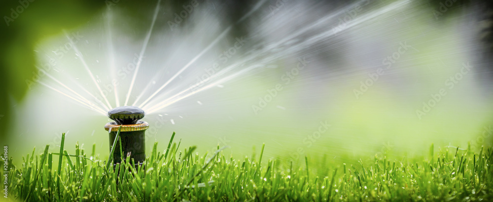 Fototapety, obrazy: automatic sprinkler system watering the lawn on a background of