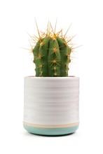 Small Indoor Cactus Plant In W...