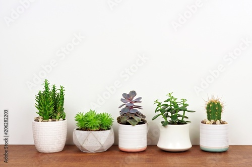 Carta da parati  Group of various potted cacti and succulent plants in a row