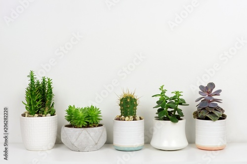 Fotografia  Group of various potted cacti and succulent plants in a row