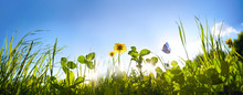 Fresh Green Grass Clover, Dandelion Flowers And Flying Butterfly Against Blue Sky In Summer Morning At Dawn Sunrise In Rays Of Sunlight In Nature, Macro, Panoramic View, Landscape, Copy Space.