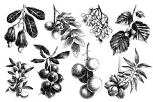 Hand Drawn Nuts On Branches