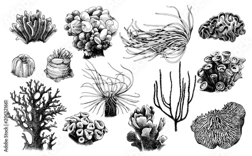 Photo  Hand drawn collection of corals reef plants