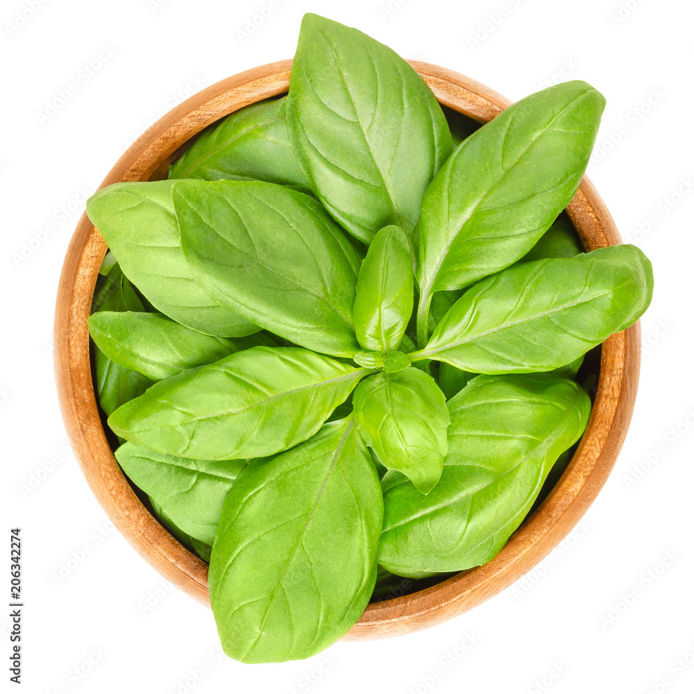 Fototapety, obrazy: Fresh green basil leaves in wooden bowl. Also great basil or Saint-Joseph's-wort. Ocimum basilicum. Culinary herb. Edible, raw and organic. Isolated macro food photo closeup from above over white.