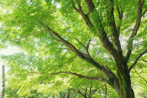 森林公園の樹木