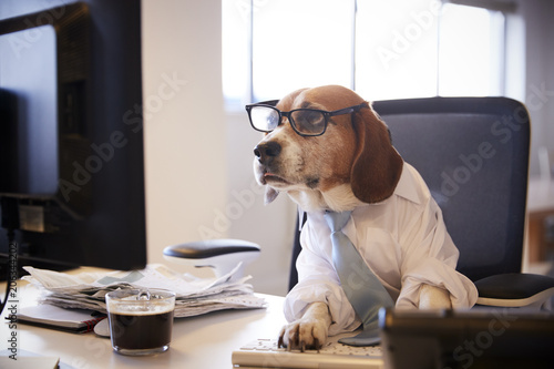 Photo  Beagle Dressed As Businessman Works At Desk On Computer