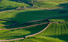 Stonewalled Fields In Yorkshire Dales