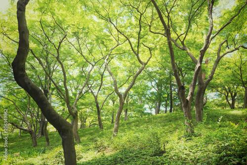 新緑の森の木々
