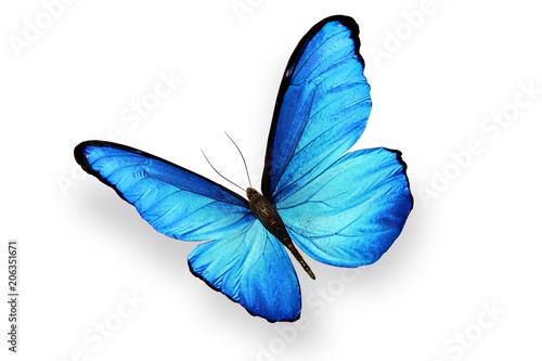 красивая бабочка с большими голубыми крыльями, изолирована на белом фоне