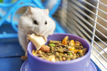 A Hamster Eating Inside His Ca...