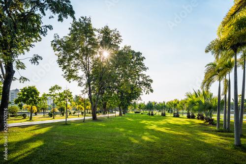 Fotografia, Obraz  Green grass field with palm tree in Public Park