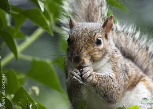 Close-up portrait of squirrel sitting by plants Poster