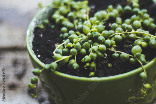 High angle close-up of vegetables growing in potted plant at garden